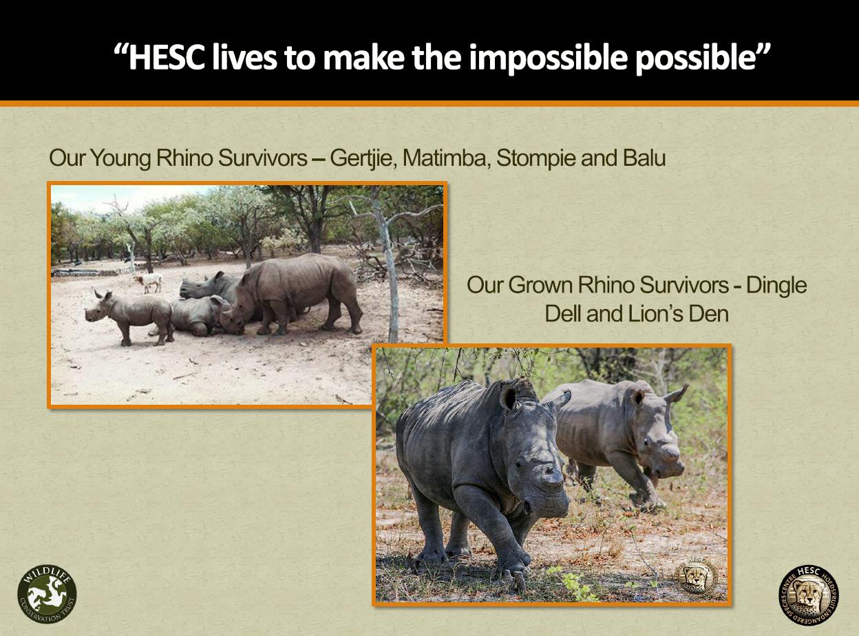 HESC_6