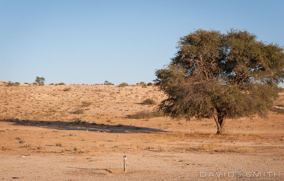 Kalahari 141_D371115