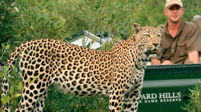 leopard-hills