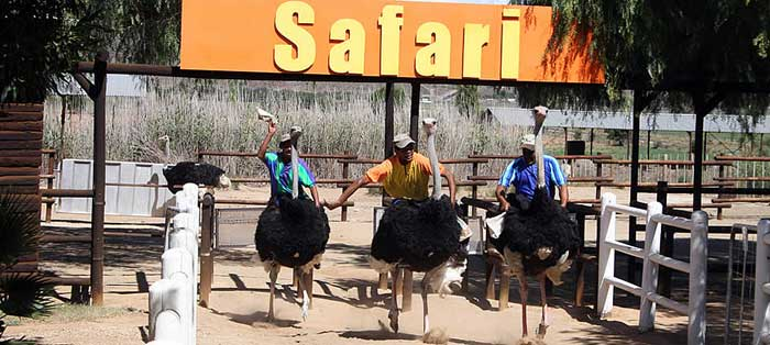 safari-ostrich-race